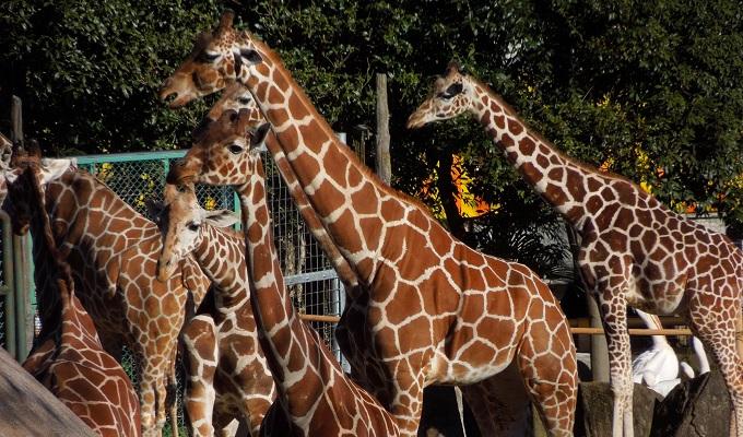 多摩動物公園2015.2画像7