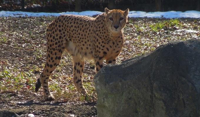 多摩動物公園2015.2画像3