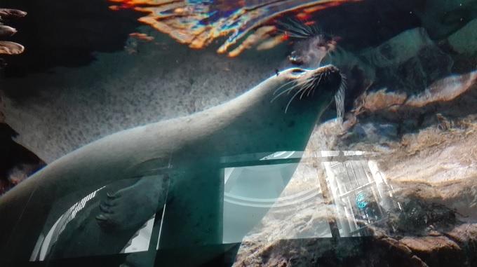 アクアワールド茨城県大洗水族館デート16