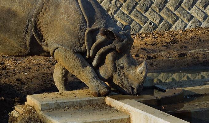 多摩動物公園2015.2画像10