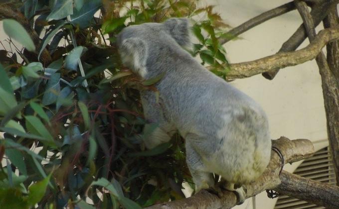 多摩動物公園2015.2画像15