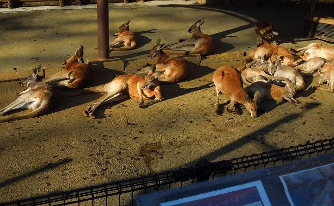 多摩動物公園2015.2画像12