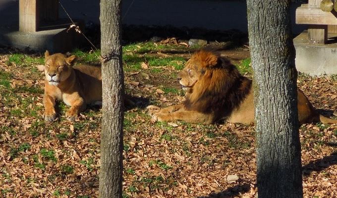 多摩動物公園2015.2画像2
