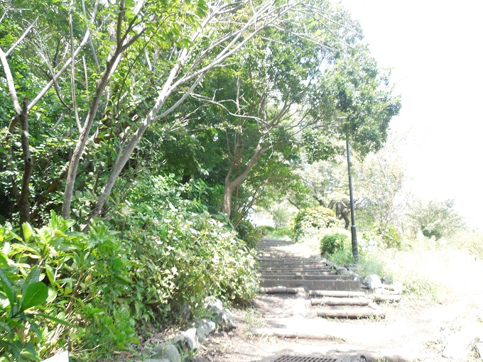 ワニ銀高麗山公園2